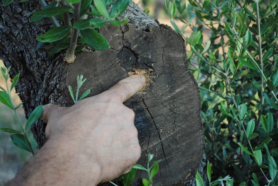 Productos para sulfatar olivos